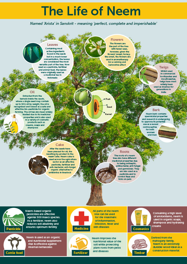 Neem Infographic