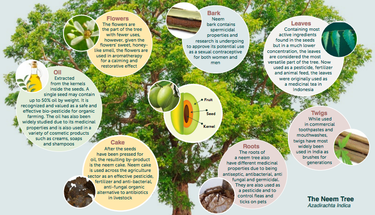 different uses of trees