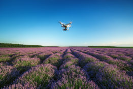 Varna, Bulgaria - June 22, 2015,: Flying drone quadcopter Dji Phantom 2 with digital camera GoPro HERO4,  over beautiful lavender field in Provence