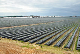 Greenhouse frames for strawberry cultivation in Huelva province, Spain. Strawberries are grown on beds wrapped in black plastic, equiped with drip irrigation lines. In winter the greenhouses are covered with white plastic in order to reach highest production in early spring.